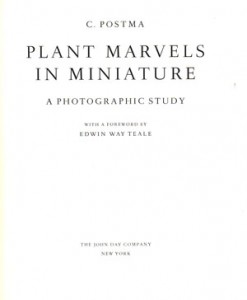 plant-marvels-in-miniature